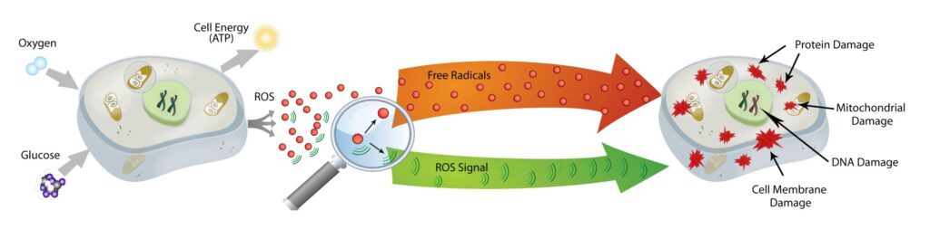 led therapy cell damage
